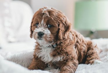 Cute Dog puppy for sale in cheapest price